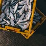 解密》你買的魚可能是山寨版!《衛報》揭露:海鮮詐欺是全球現象,4成漁產貼錯標籤!