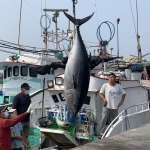 小漁船釣起180公斤「第1鮪」 船長討海25年首次開胡:緊張又興奮