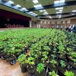 緝毒史上最大量!販毒集團剷平山頭種大麻 調查局查獲1608株市價5億