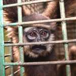 20年買賣4億2000萬隻!國家貧富差距驅動國際野生動物交易