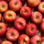 「台灣人以前非常喜歡我們的水果!」從清酒到蘋果,福島農民為核食指控奮戰10年