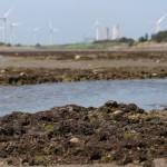 「留下藻礁才可能2050淨零碳排」 環團籲三接遷址再拋天然氣發電退場