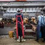 朱淑娟專欄:減少市場感染風險,雙北應盡早廢除活禽交易