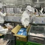 高市府推699元「海量海味箱」 高營養優質蛋白質新鮮送到家