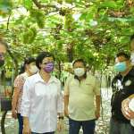 彰化釀酒葡萄產期 王惠美探視農戶盼台酒提高葡萄收購價
