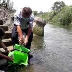 保護珍貴白魚 食水嵙溪台灣白魚放流原棲地