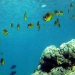 研究警告:海洋生態瀕臨滅絕
