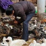 江西全球首例 H10N8禽流感患者死亡