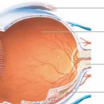 列印眼睛細胞 重建盲人視網膜