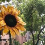 專家評析:為太陽花學運多做一些設想