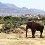 野生動物減少 導致童奴氾濫