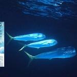 夏曼.藍波安《大海浮夢》選刊(4):航海摩鹿加海峽