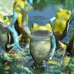 王健壯專欄:五隻青蛙的故事