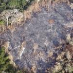 亞馬遜雨林毀滅者 巴西政府破獲黑幫