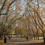 英國研究:綠色環境有益健康