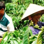 越南咖啡的美麗與哀愁