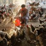 H7N9疫情升溫 浙江一家三口感染