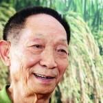 中國水稻之父獲諾貝爾和平獎提名