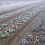 霧霾殘害作物 中國農業遇「核冬」