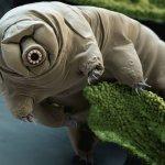 凍不死、壓不扁 地球上最強悍的動物:水熊蟲