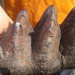 「撿到酷石頭」美國男孩與史前化石的相遇