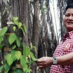 柬大亨涉嫌盜林 記者調查遇害