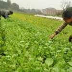 「威權時期」不是大家都選擇服從嗎?─對徐世榮台灣農村土改論述的批判總綱(1)