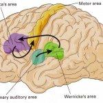 我們都需要設計思維:《打開狄波諾的思考工具箱》選摘(1)