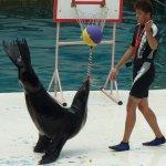 朱淑娟專欄:動物表演干終身學習什麼事?