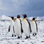 走入南極大陸的浩瀚世界,親眼看見千萬年自然造景的湛藍冰山