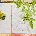 防呆!第一次種菜就上手的植物地毯