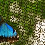 如何讓錢滾錢?沒有個10年,你根本看不到複利投資的蝴蝶效應!