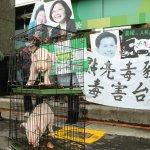 朱淑娟專欄:瘦肉精肉品進口,馬做錯的、蔡還要再錯一次?