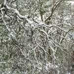 上山追雪》大屯山停下冰霰 巴拉卡公路解除雪鏈管制