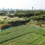 朱淑娟專欄:三成耕地被占用,如何保障台灣的糧食安全?