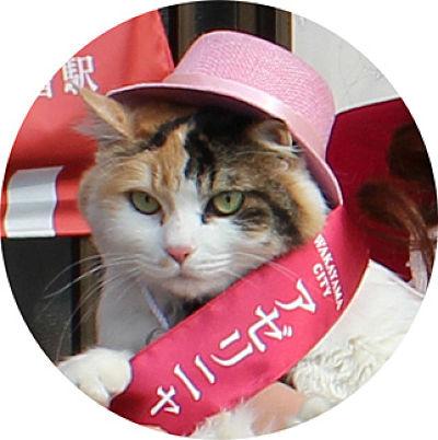 貓站長小玉的代理人「二玉」。