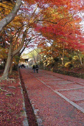 在這裡,旅人們可以不同角度享受不一樣的美感,而這也正是「紅葉狩」的樂趣。(圖片來源:Flickr CC授權作者Eddy Chang)