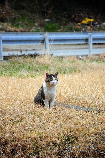 cat26.jpg