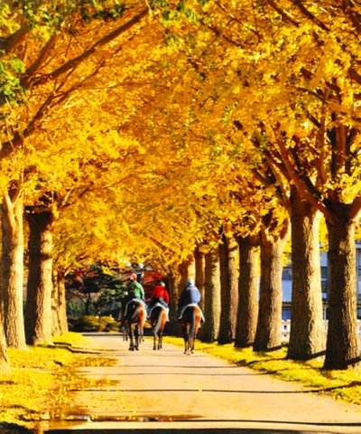 成田山公園美麗的秋日風景畫。(圖/成田市觀光協會)