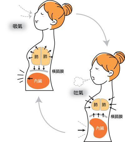 腹式呼吸圖解 (圖/聯合文學提供)