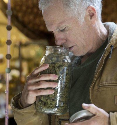美國8州將在11月8日決定大麻是否部分合法化。(美聯社)