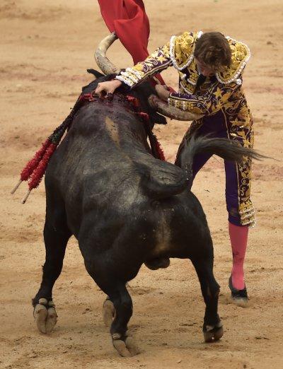 鬥牛是西班牙的傳統文化(AP)