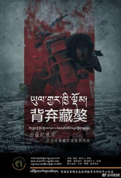 青藏高原地區的流浪藏獒問題日益受到重視。(圖/青海省雪境生態宣傳教育與研究中心微博圖片)