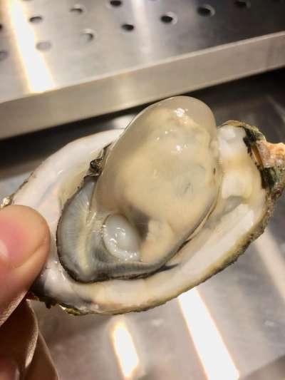 (圖/樹林興仁夜市-貝蛤蛤-海鮮專賣店f07f08@Facebook)