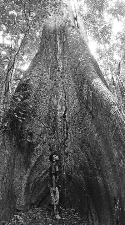 亞馬遜雨林內的百年老樹,很難估計到底有多高。(圖/山岳出版提供)
