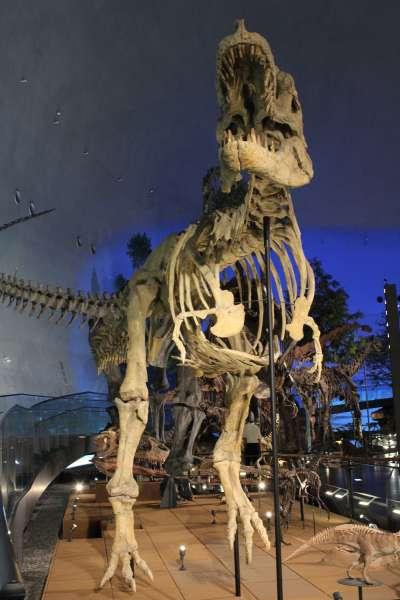 怵目驚心的大型恐龍骨骼標本。(圖/時報出版提供)