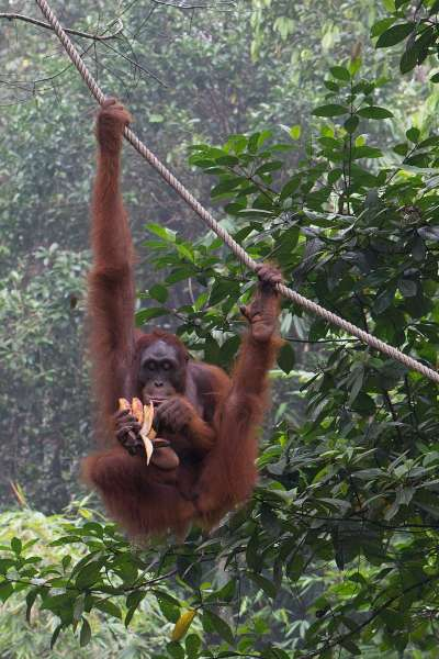 馬來西亞砂勞越自然資源與生物多樣性豐富(Thomas Quine @ Wikipedia/ CC BY 2.0)