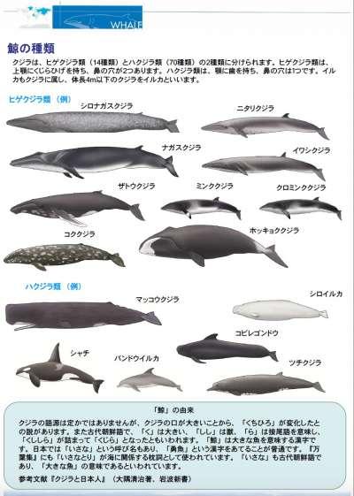 鯨類。(日本水產廳)