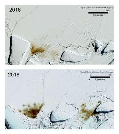 南極洲的哈雷海灣發生冰層崩塌後的衛星照對比圖。(AP)