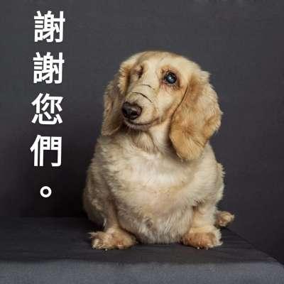 (圖/浪浪的後盾協會提供)